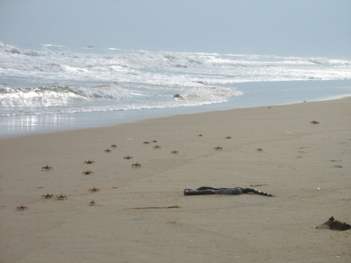 Море принесло пищу...
