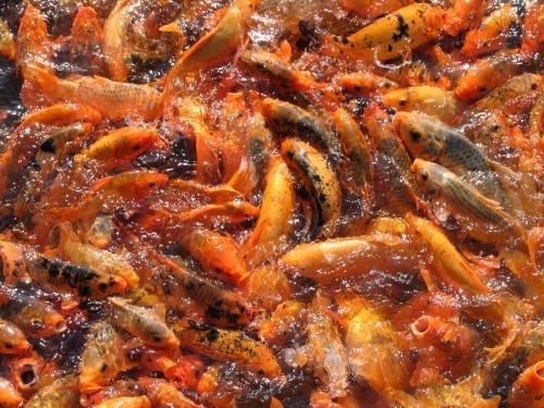 Супчих из рыб в цитадели Хюэ
