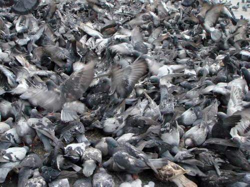 """такой же """"супчик"""" из голубей (Перу, Арекипа)"""