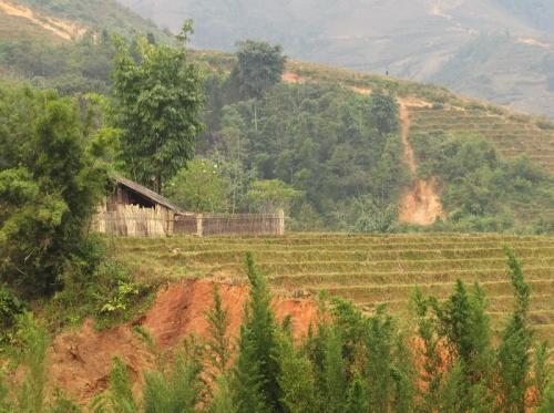 Домик в бамбуковых зарослях