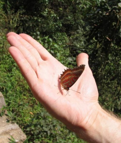 Бабочка села на ладонь и не хотела улетать