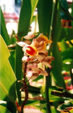 цветочек