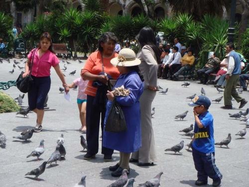 торговка кормом для голубей