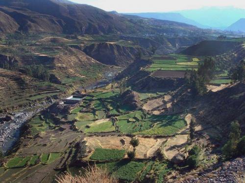высокогорные поля