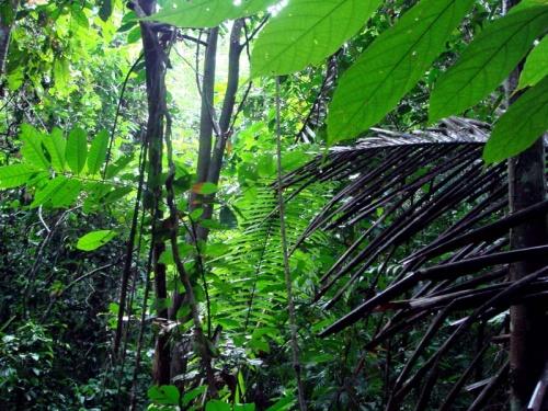 вот они - джунгли!