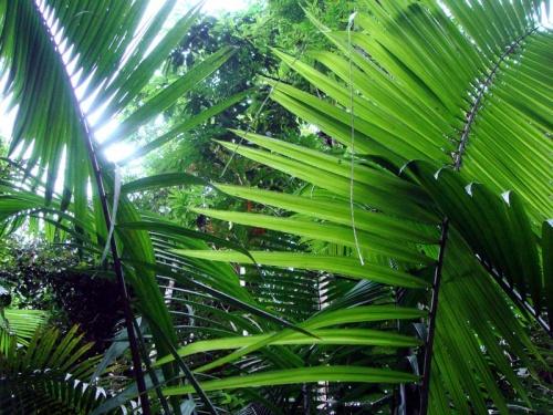 джунгли...