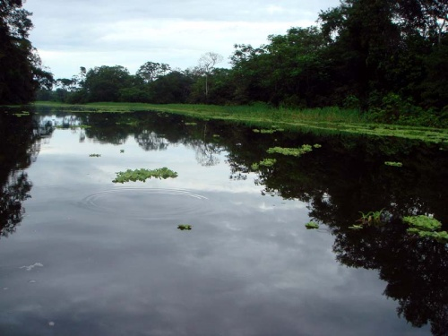 Амазонка рано утром