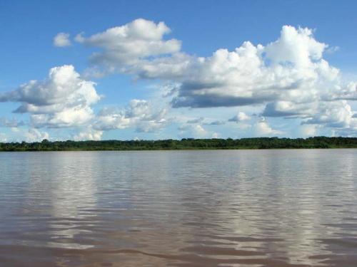Амазонка-кормилица  -