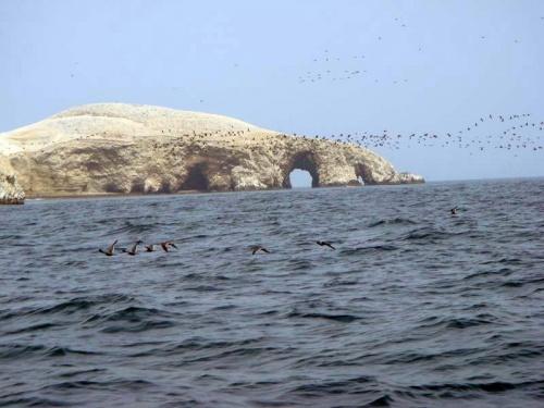 птичьи базары на островах Бальестас