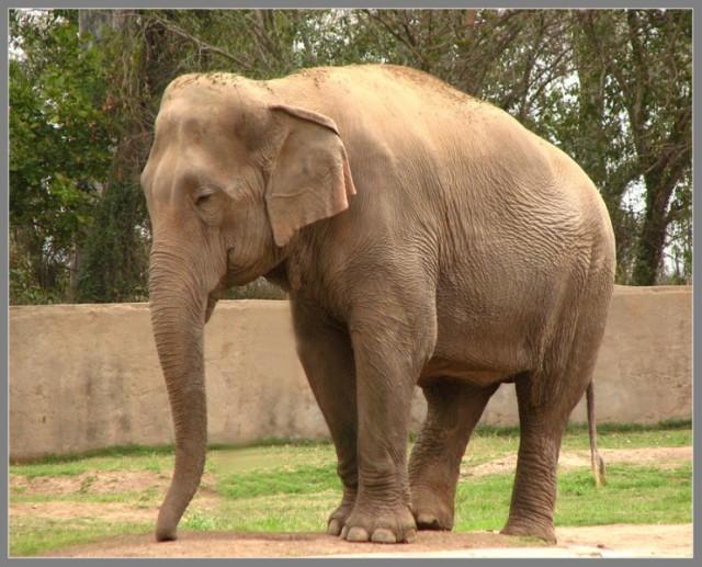 Mahindra Zoo - слоник