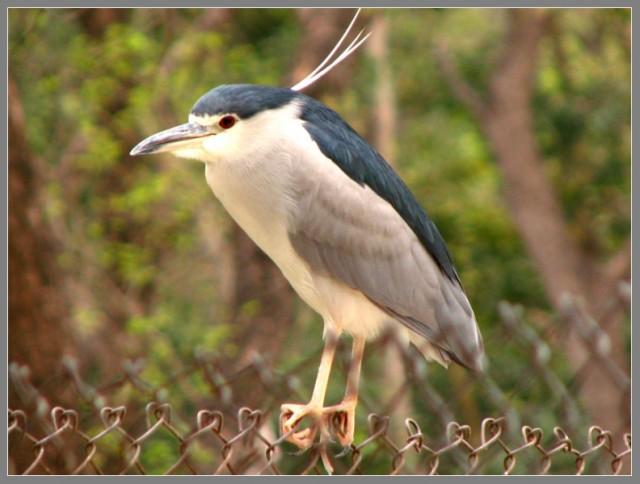 Mahindra Zoo - птичка