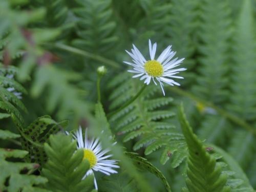 цветы для Маши :-) Фото badguest.