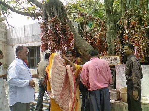 Лакшми Нараян Мандир,дерево желаний