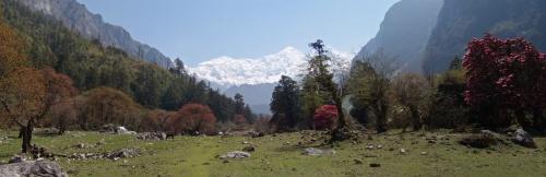 Поляна где-то между Bimtang и Dharapani