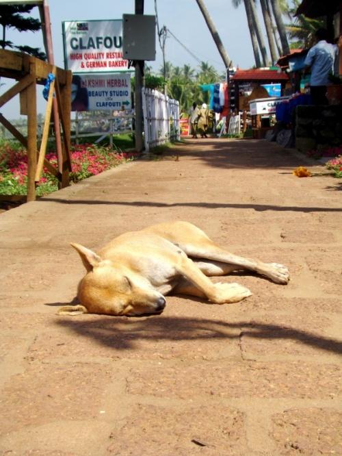 собаки дрыхнут поперек тротуара