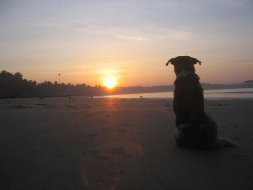 буду рассветы с собаками встречать.........