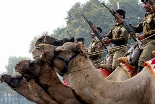 Грозно-боевые верблюды