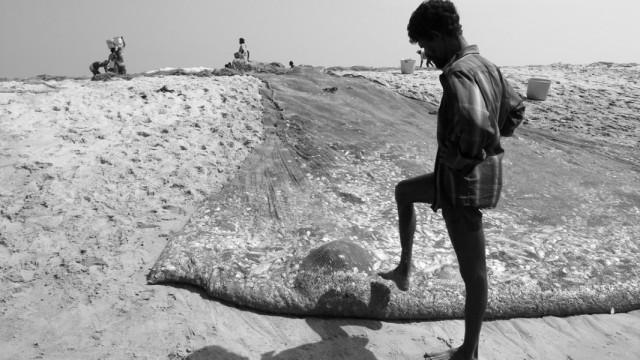 Рамешварам. Черепаха в сетях.