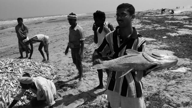 Рамешварам. Бенгальский инженер и рыба.