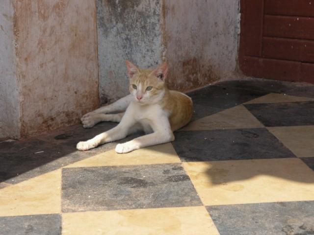 важная кошка, при храме живет