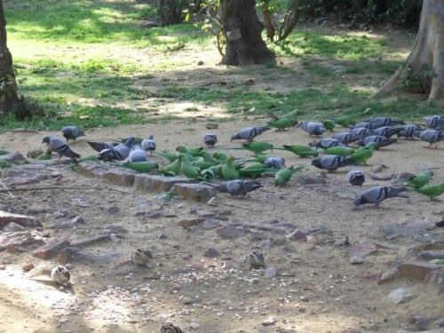 Всем хватит: попугаи, голуби, бурундуки