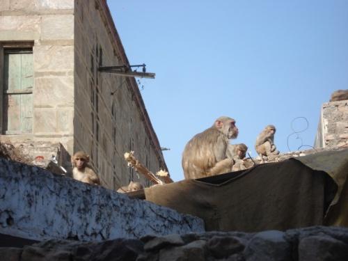 любимые обезьянки
