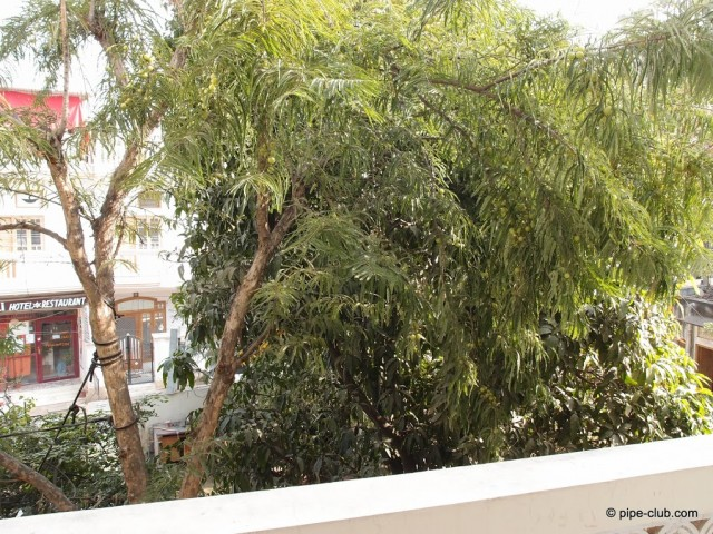 Дерево Амлы