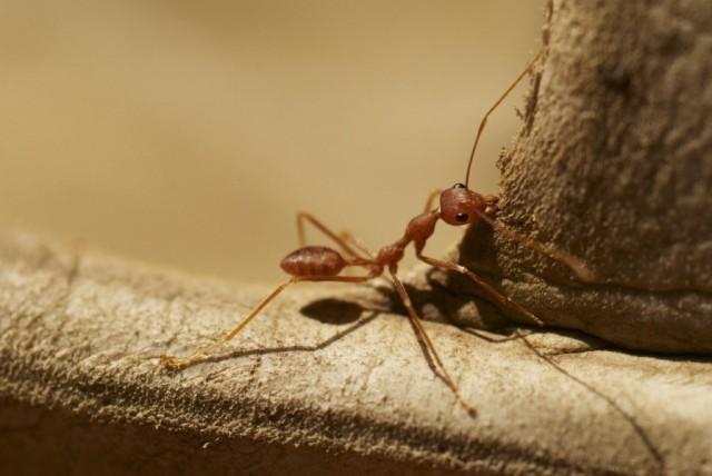 тот самый муравей