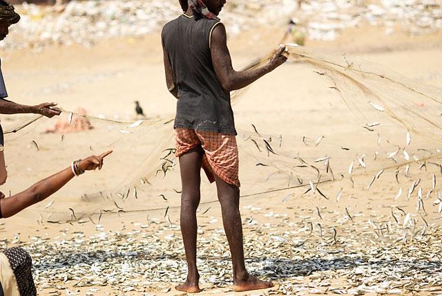 рыбаки достают из сетей рыбу