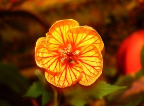 Цветочег для Лены