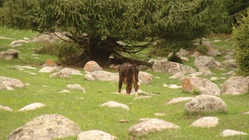 и на камнях пасут лошадок