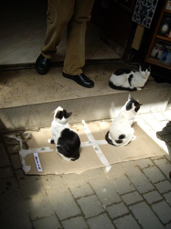кошки-священные животные
