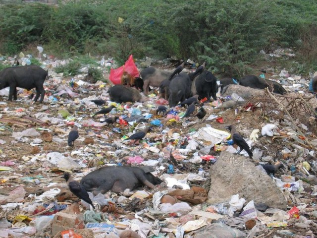 едят мусор