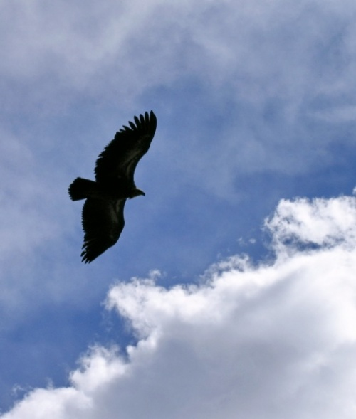 Птица другого полета :)