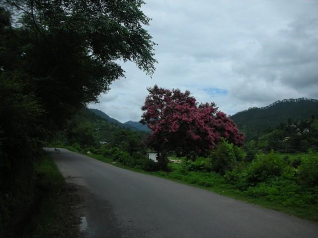 дорога в Каушани