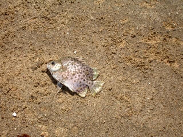 и поймал серебрянную рыбку