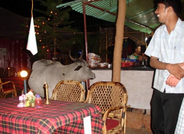корова зашла в ресторан