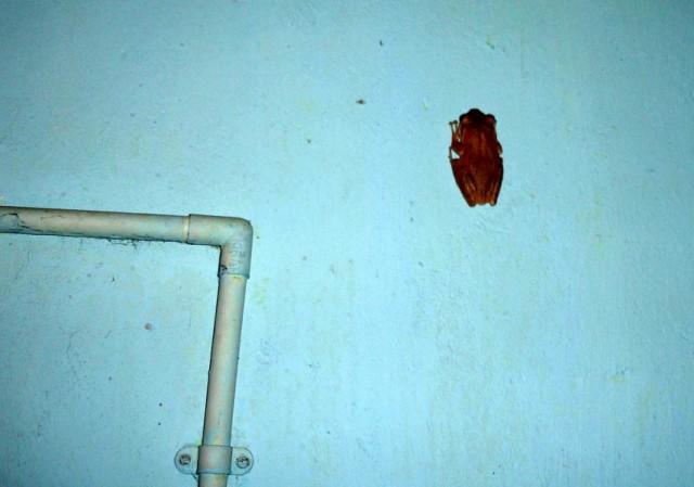 лягушка ползёт по стене, трава хорошая