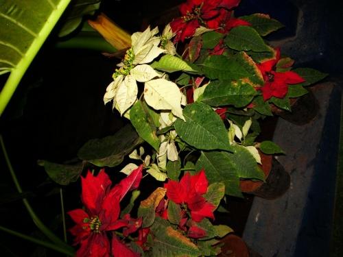 Новогодние цветочки