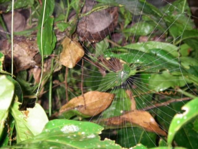 дом паука