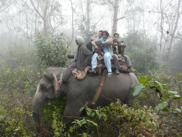 встречный слон