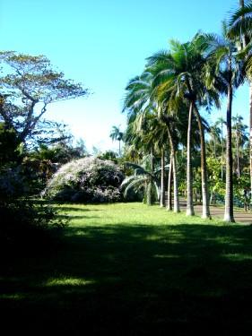 Ботанический сад Памплемусс. Пальмы разные