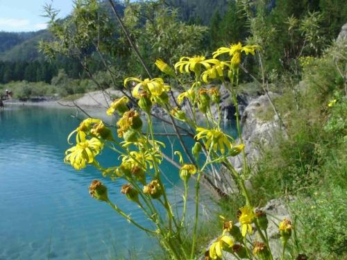 алтай голубые озера