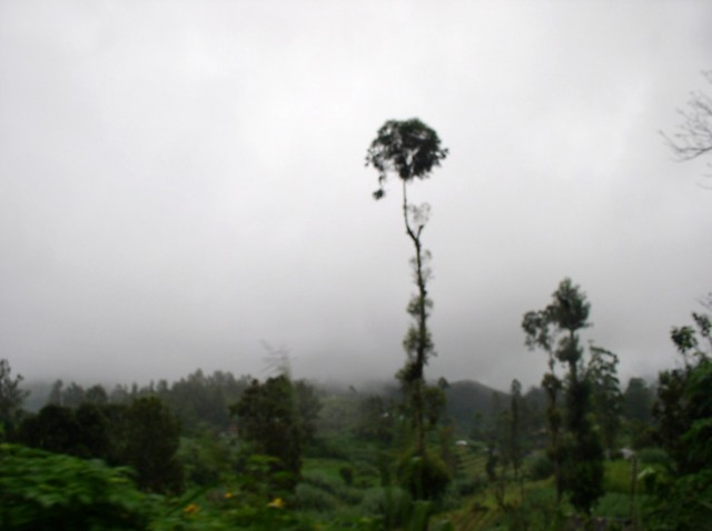 странные призрачные деревья