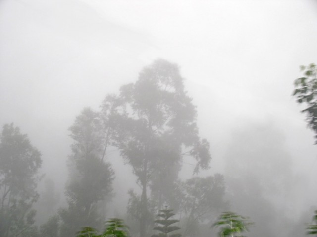 и туманные леса