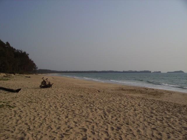 Северный конец Парадайса aka Shiroda Beach, там ёлочковый лес рядом, многие до туда доезжали