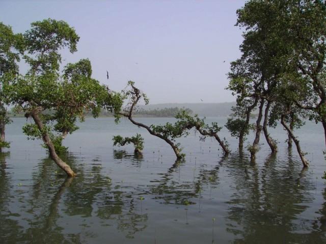 Чапорский залив со стороны Моржима