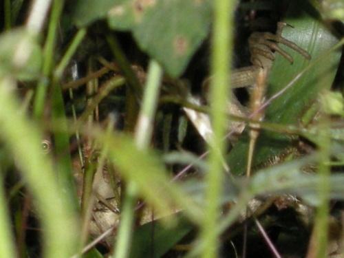 прячемся в траве