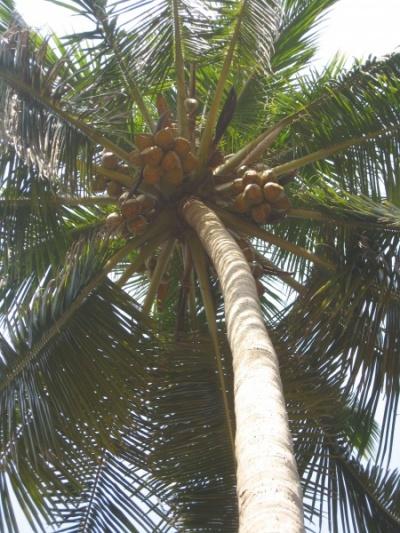 актуальна притча о чуваке под кокосовой пальмой...