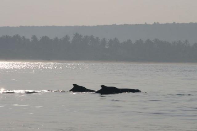и дельфины!